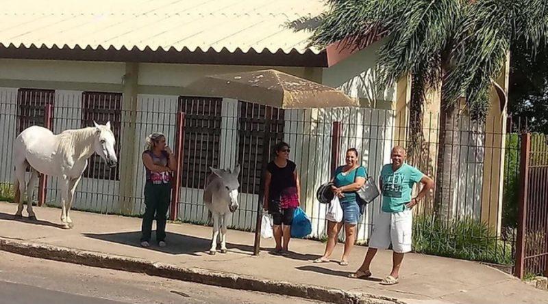 """Burro faz sucesso """"esperando ônibus"""" em parada em frente a Ala Jardim Europa"""